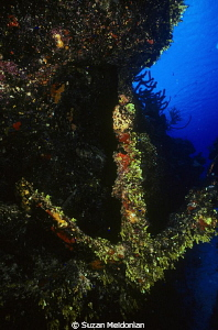 Coral covered Anchor somewhere in Bay of Biscayne by Suzan Meldonian 